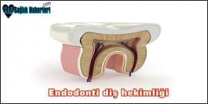 Endodonti nedir?